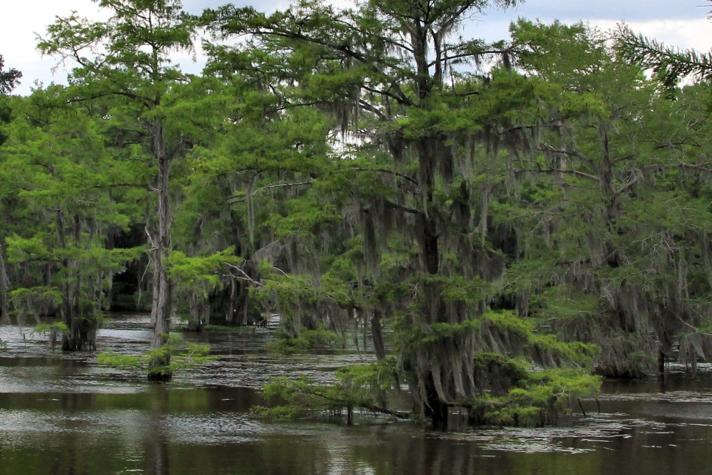 The mossy trees of Caddo Lake create an enchanting world to explore by boat.